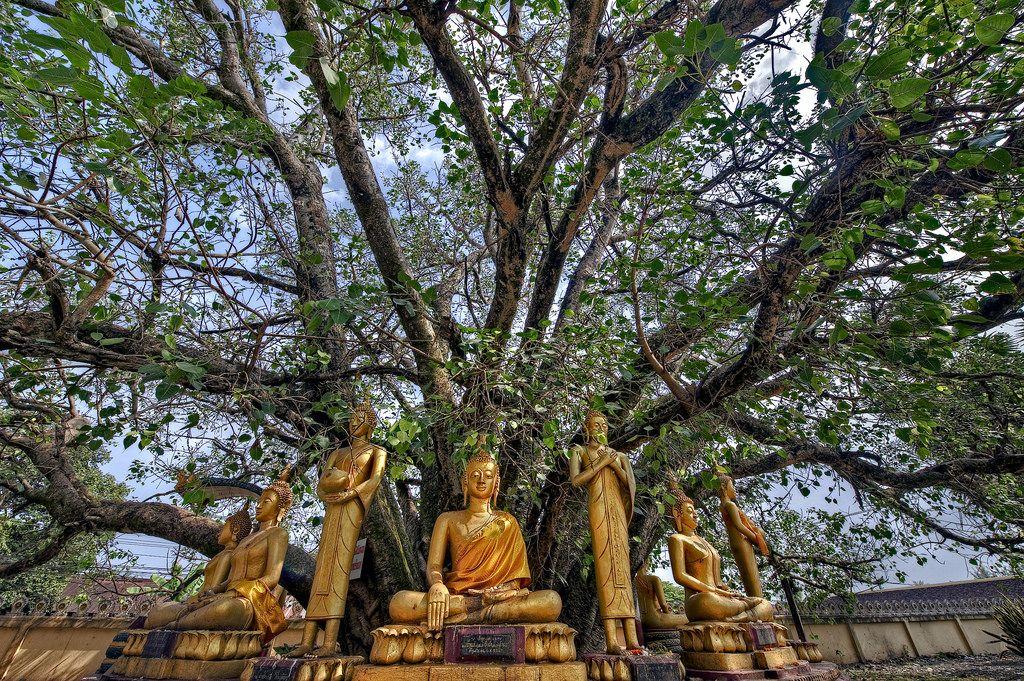 Essences of Laos (5days/4nights)